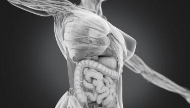 Photo: IBD Female Anatomy