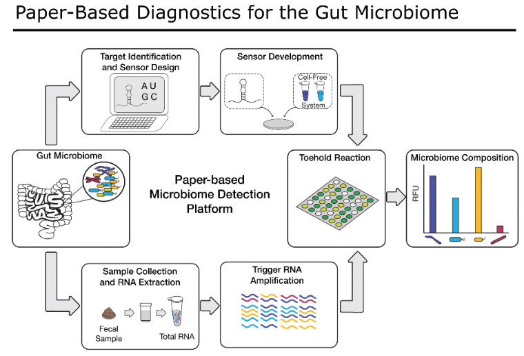 Collins Project Slide 1: Paper-Based Diagnostics for the Gut Microbiome